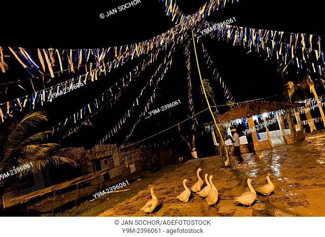 Geese walk at the ritual dance yard outside the temple (terreiro) in São João de Manguinhos, Bahia, Brazil, 9 February 2012