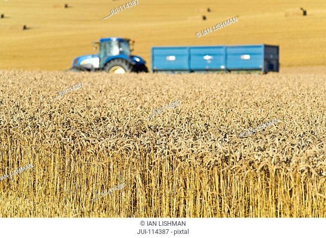 Tractor And Trailer In Field Collecting Wheat Harvest