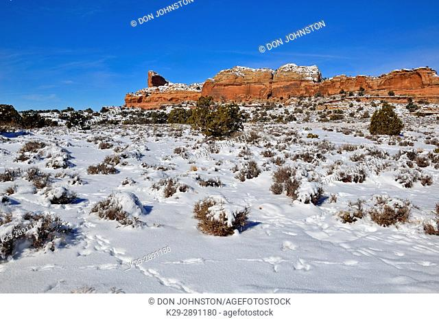 Junipers and fresh snow at The Neck, Canyonlands National Park, Utah, USA