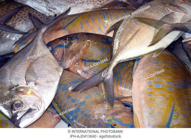 Philippines Cebu Mactan Island Mactan City Fresh fish for sale Adrian Baker