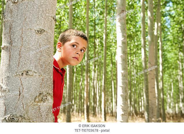 USA, Oregon, Boardman, Boy 8-9 playing seekand hide between poplar trees in tree farm