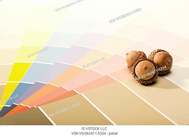 Studio shot of color samples and acorns