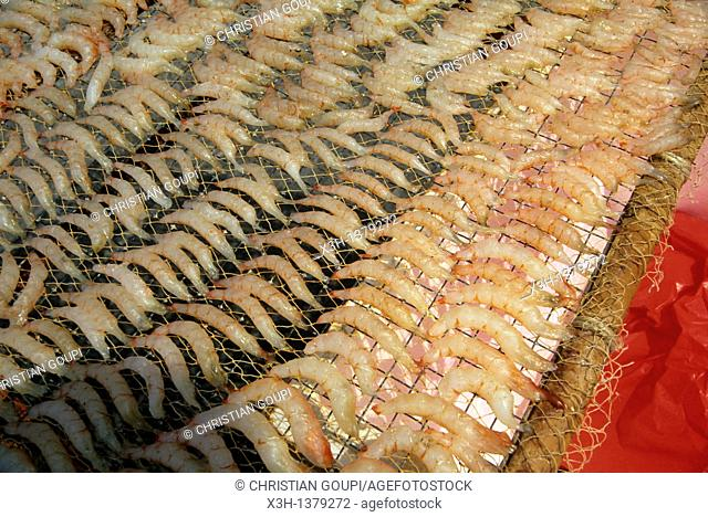 shrimps drying, Chung Chau island, Islands District, New Territories, Hong-Kong, People's Republic of China, Asia