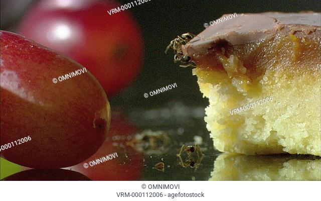 Whitefooted Garden Ants crawling over slice of cake on worktop with red grapes