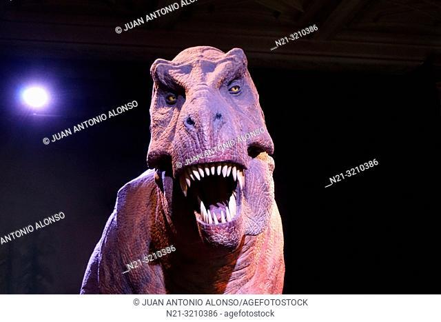 Tyrannosaurus Rex carnivore dinosaur animatronic model in the Natural History Museum. London, England, Great Britain, Europe