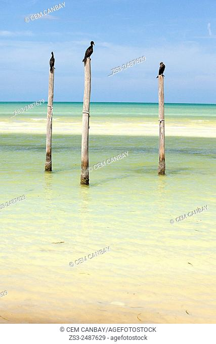 Three birds standing on the poles at the beach, Isla Holbox, Quintana Roo, Yucatan Peninsula, Mexico