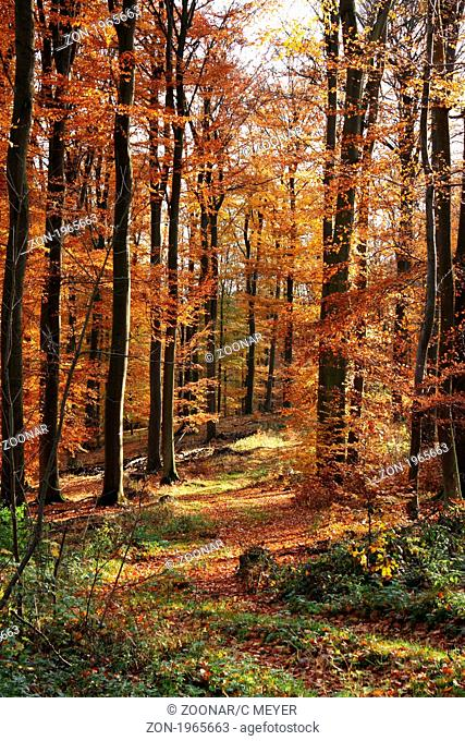 Book in an autumn forest in the Taunus in Hessen