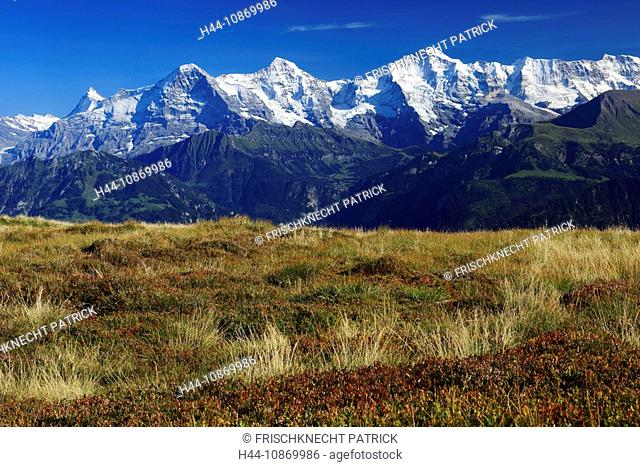 To nightmares, Alps, Alpine panorama, view, mountain, mountains, mountain massif, mountain panorama, Bern, the Bernese Oberland, bilberry, 3-stars, Eiger, ice