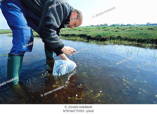 A man collecting frogspawn in environment protection view, Sweden