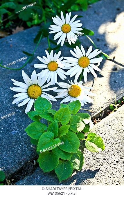 White flowers and green leaves on the ground