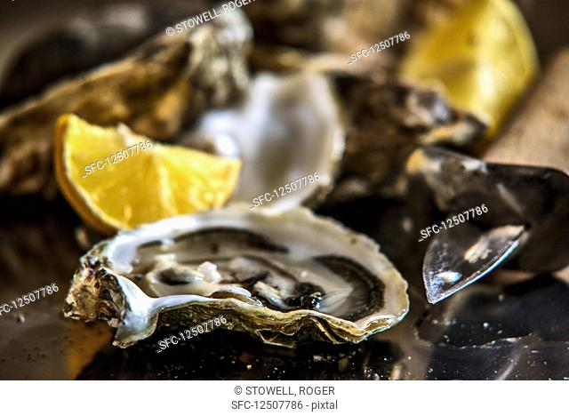Marennes-Oléron oysters (close-up)