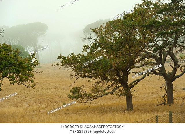 Color , Color image , Colour image , Digital , Dry , Eerie , Grass , Hillside , Horizontal format , Lonely , Mist , No people , Oak trees , Outdoors , Solitude