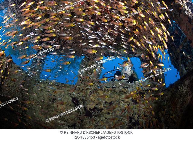 Scuba Diver at Bridge of Hembadhoo Wreck, North Male Atoll, Maldives