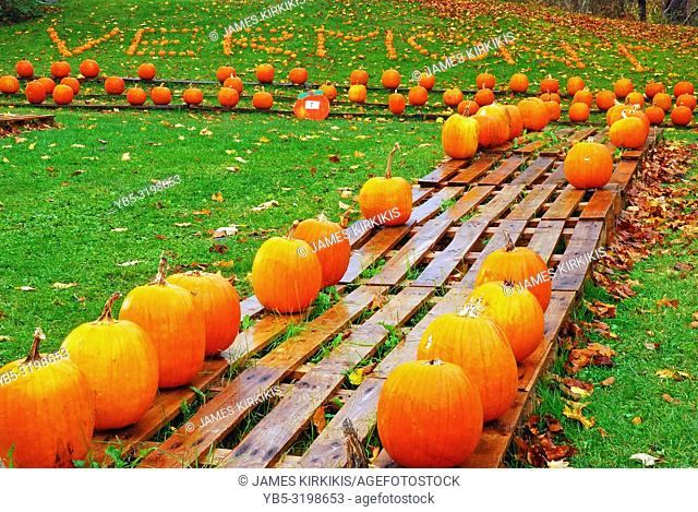 Pumpkins are displayed at a Vermont farmstand