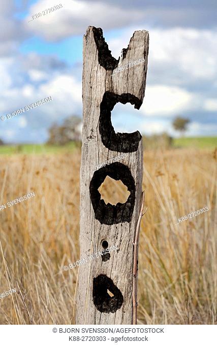 Fence post after bushfire. Victoria, Australia