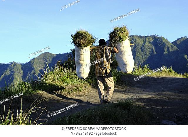 Local people carrying grass and plants near Bromo volcano, Java, ndonesia, Southeast Asia