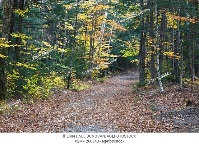 East Side Trail during the autumn months in Lincoln Woods  Lincoln Woods is locacted in Lincoln, New Hampshire USA