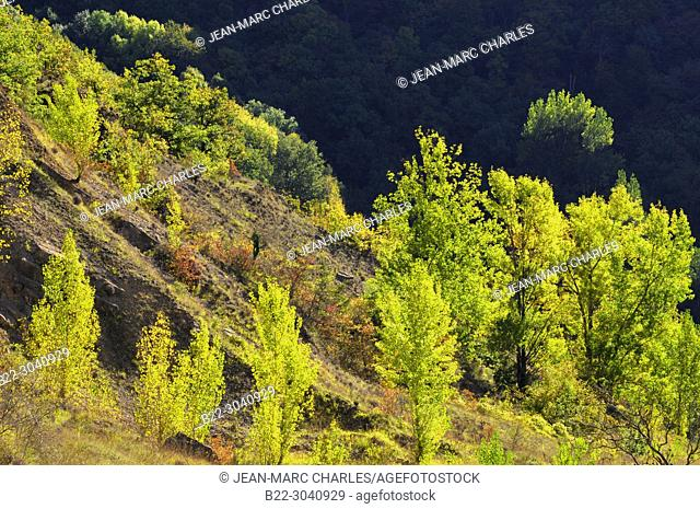 Colors of forests in autumn, Panat, North-Aveyron, Midi-Pyrénées, Occitanie, France
