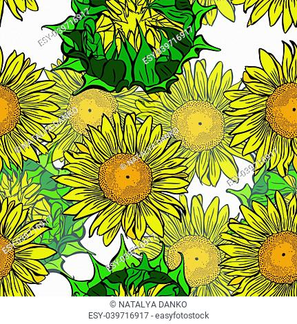 blooming yellow sunflowers and unblown green flower buds of a seamless pattern isolated on white background