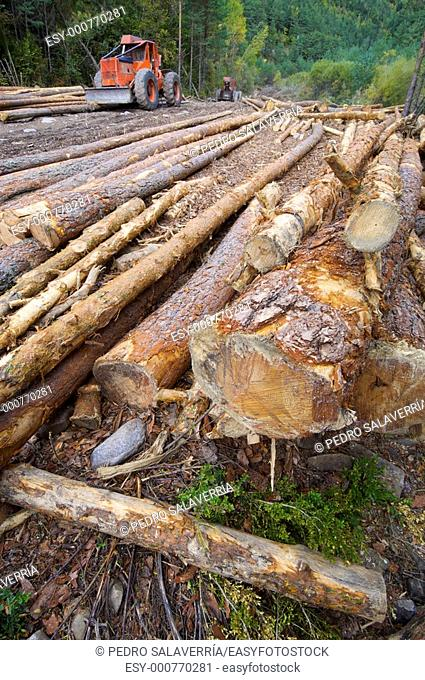 buldozer and cutted trunks in a forest, Anso valley, Pyrenees, Huesca, Aragon, Spain