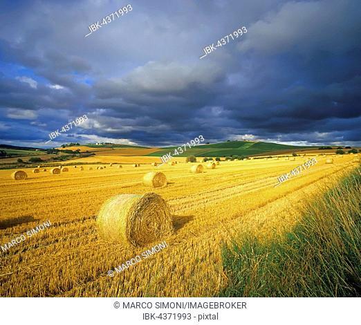 Hay bales, Avoch, The Black Isle, Highlands, Scotland, United Kingdom