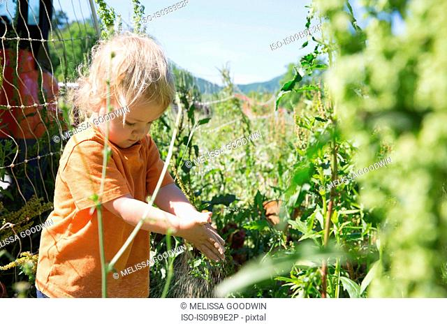 Female toddler amongst plants free range organic farm