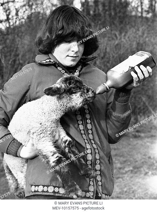 A girl hand-feeding lamb whose mother has died or rejected it, from a milk bottle with a teat on the end of it