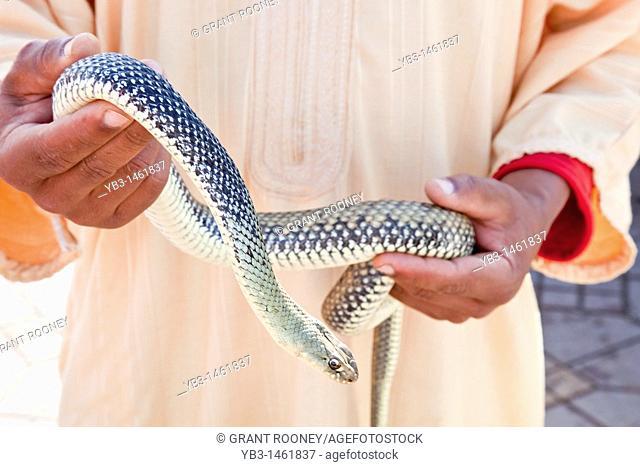 Man holding snake, Djemaa el fna, Marrakech, Morocco