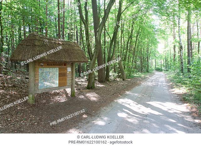 Forest at Serrahn, Carpin, Müritz National Park, Mecklenburgische Seenplatte district, Mecklenburg-Vorpommern, Germany / Wald, Serrahn, Gemeinde Carpin