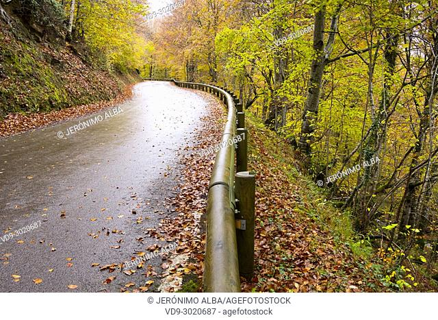 Autumn leaves and mountain road landscape, Saja Natural Park, Saja-Nansa, Cantabria, Spain Europe