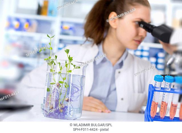 Female laboratory assistant using a microscope with plants in a beaker