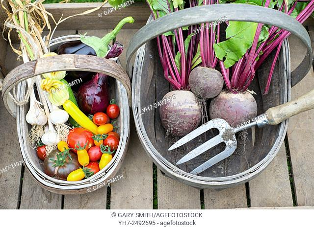 Wooden trug with freshly harvested various summer vegetables, including tomatoes, onion, courgettes, aubergine, garlic and beetroot
