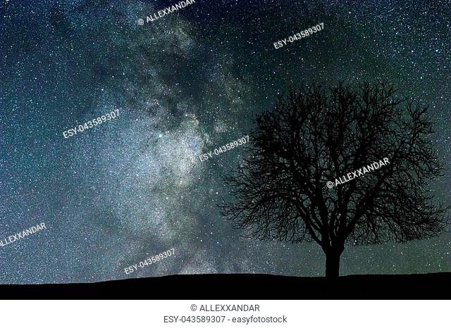Milky Way and tree. Night landscape. Space background