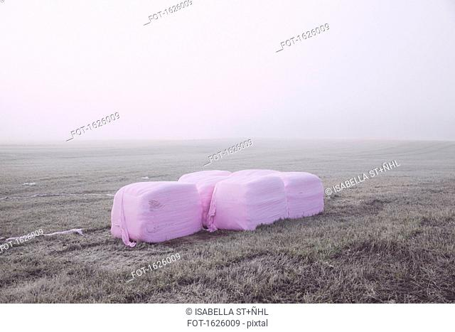 Wrapped hay bales in field on foggy day