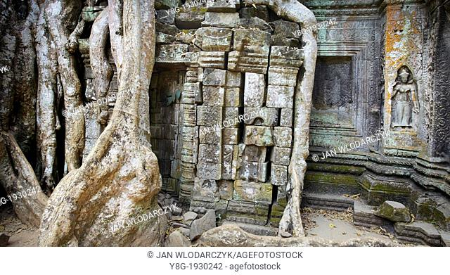 Angkor Temple Complex- roots of a giant tree overgrowing ruins of the Ta Prohm Temple, Siem Reap Province, Cambodia, Asia, UNESCO