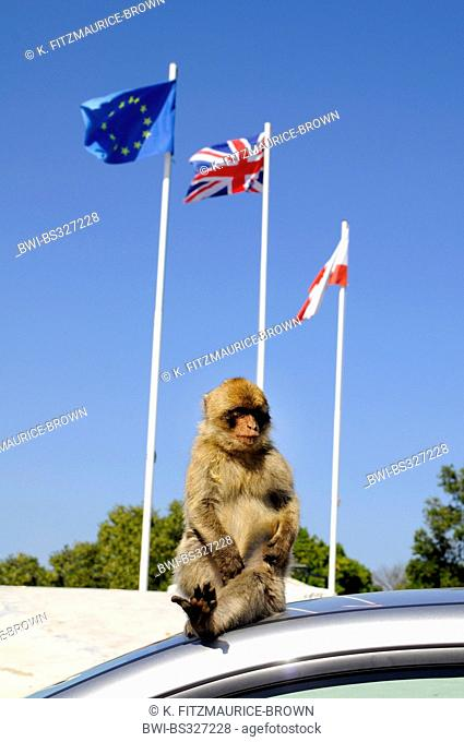 Monkey pole Stock Photos and Images   age fotostock