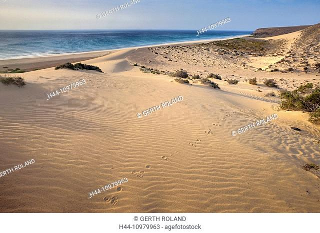 Risco del Paso, Spain, Europe, Canary islands, Fuerteventura, sea, coast, sand, dunes, sand dunes, morning light, animal tracks