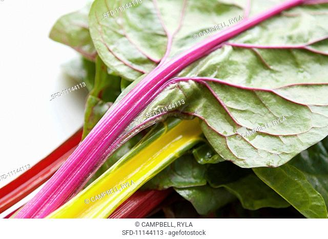 Chard leaves with various coloured stems yellow, pink and red