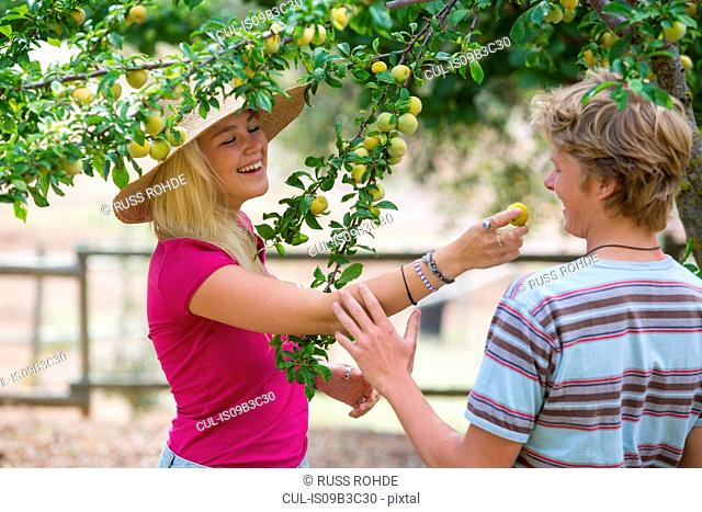 Young couple eating plum from tree on organic farm