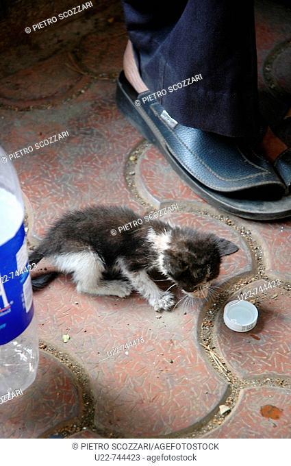 Mumbai India, little kitten abandoned on the sidewalk