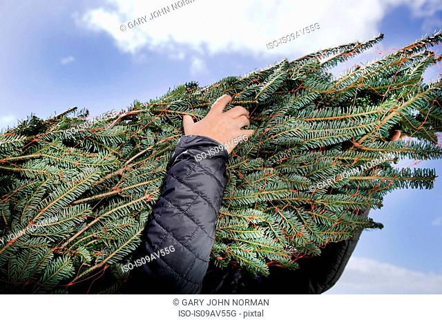 Low angle view of person carrying Christmas tree