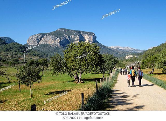 Puig de s'Alcadena 815 meters and Estorell road, Lloseta, natural site of the Sierra de Tramuntana, Majorca, Balearic Islands, Spain