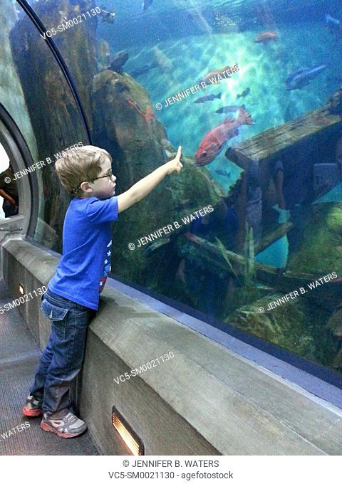 A boy points to a fish in an aquarium in Newport, Oregon, USA