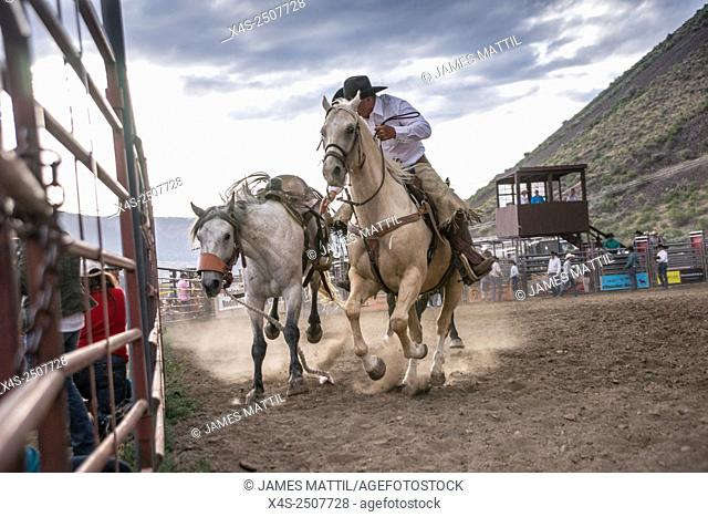 A wrangler grapples with a runaway bucking bronco at a dusty Montana rodeo