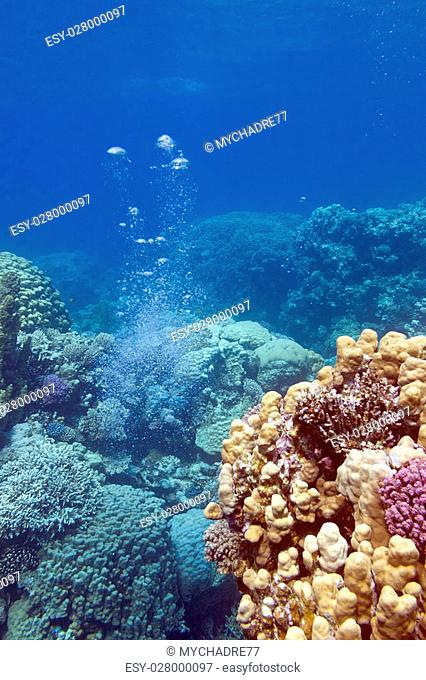 colorful coral reef with air bubbles at the bottom of tropical sea
