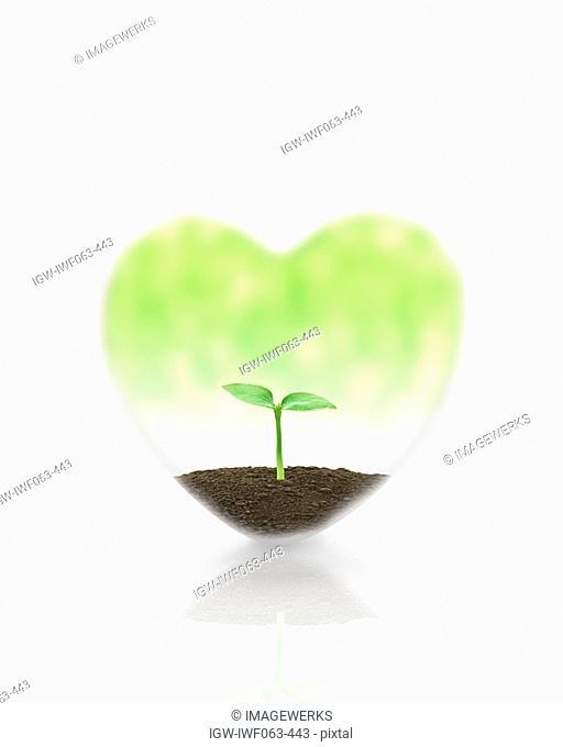 Plant in heart shape, close-up Digital Composite