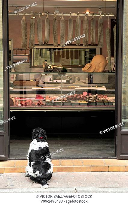 dog in front of a butcher shop