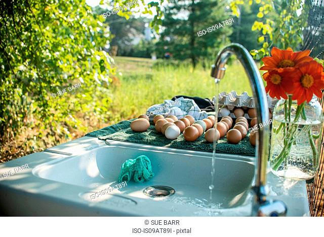 Outdoor farm sink with running water and fresh eggs on drainer