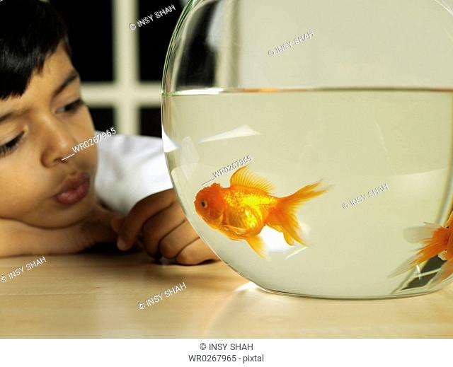 Arab Boy watching fishes in the Aquarium