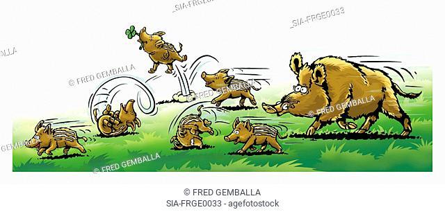 Wild boar family in field